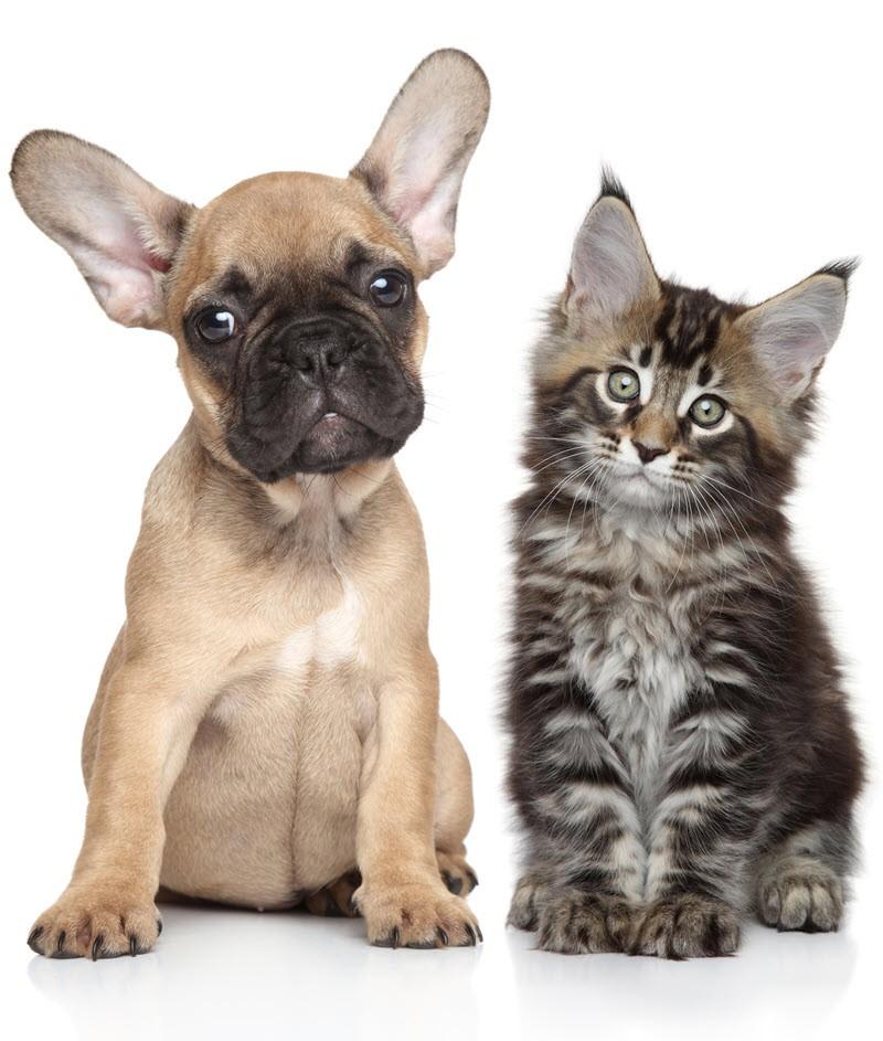 dog odor removal treatment orlando